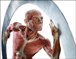 Gunther von Hagens Body Worlds